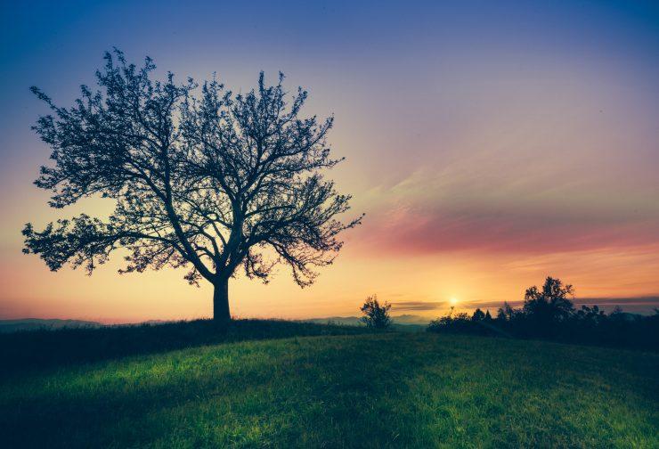 Succession Planning: Building Success Profiles