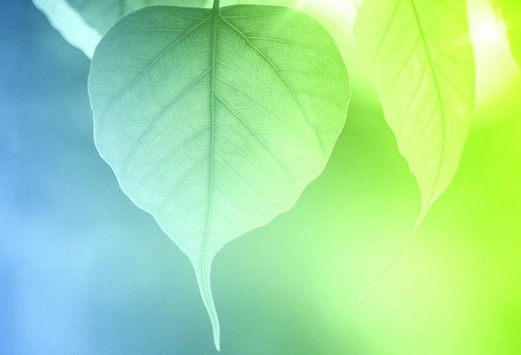 Mindfulness Enhances Business Growth